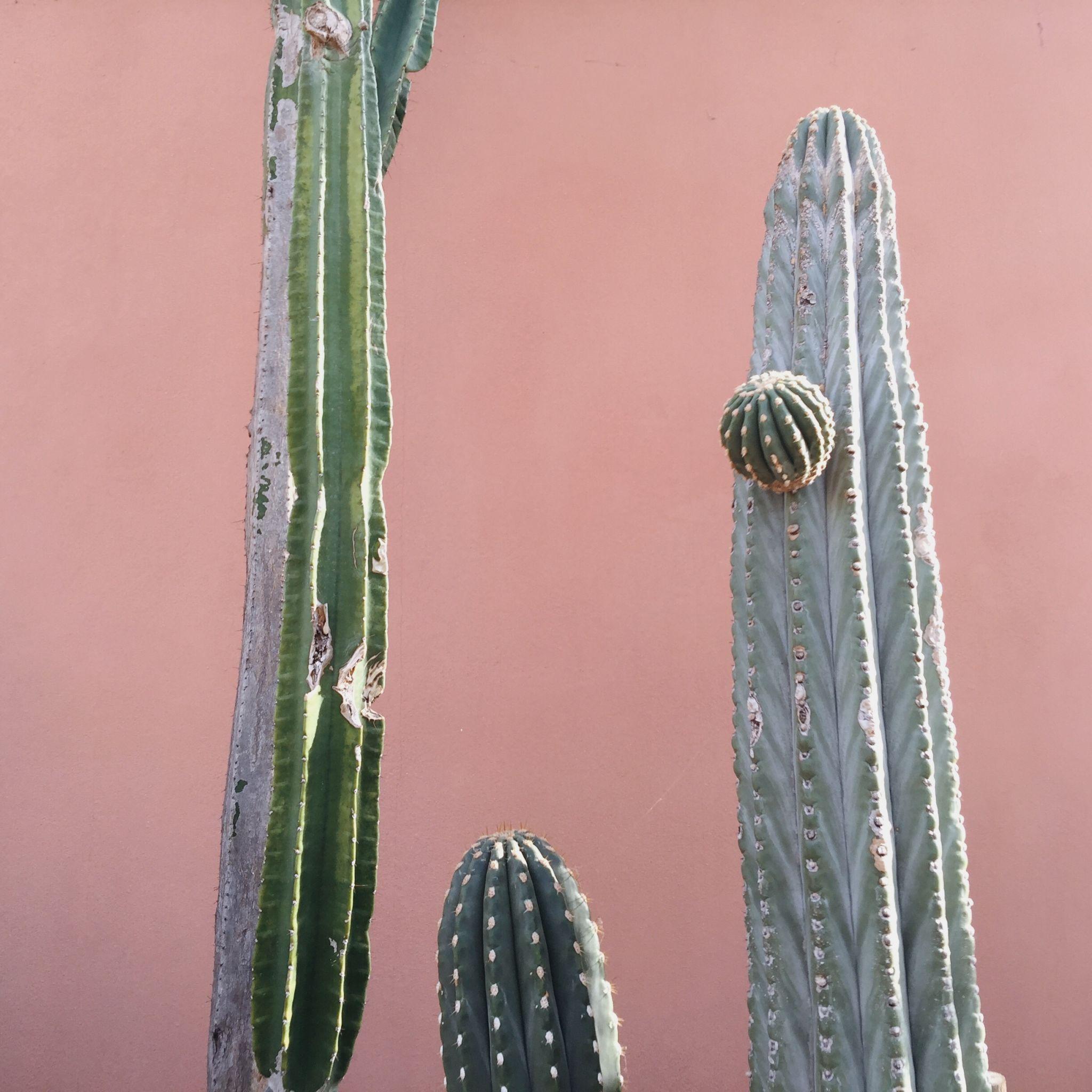 hortus-botanicus-amsterdam-botanic-garden-cactus