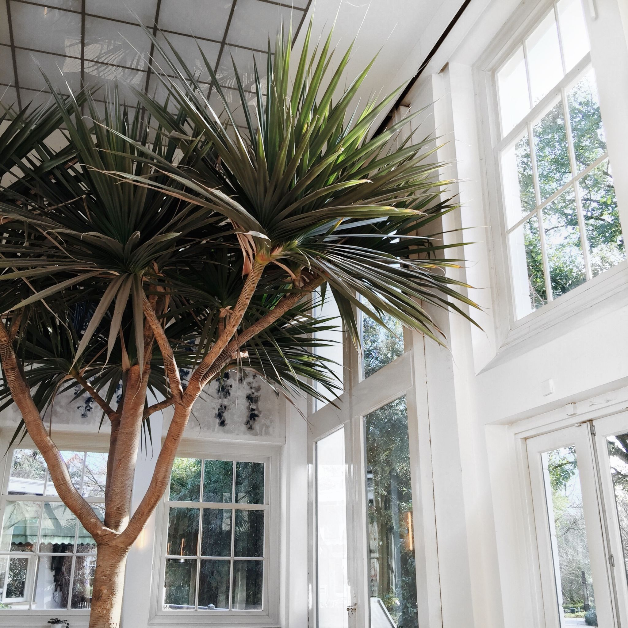 hortus-botanicus-amsterdam-botanic-garden